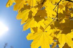 Hojas de la caída con el cielo azul Fotos de archivo libres de regalías