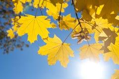 Hojas de la caída con el cielo azul Imagen de archivo