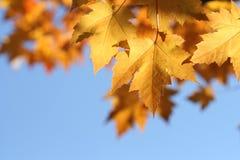 Hojas de la caída con el cielo azul Imagenes de archivo