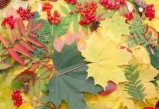 Hojas de la caída del otoño Fotografía de archivo