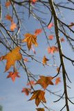 Hojas de la caída del otoño Fotos de archivo