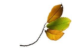 Hojas de la caída del otoño Foto de archivo libre de regalías