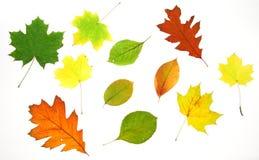 Hojas de la caída del otoño Fotos de archivo libres de regalías