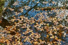 Hojas de la caída del otoño en el agua Foto de archivo
