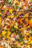 Hojas de la caída del otoño en hierba Foto de archivo libre de regalías