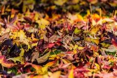 Hojas de la caída del otoño en la tierra Fotos de archivo