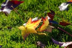 Hojas de la caída del otoño en la tierra Imagenes de archivo