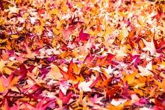 Hojas de la caída del otoño en la tierra Imágenes de archivo libres de regalías