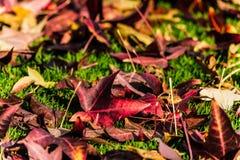 Hojas de la caída del otoño en la tierra Fotografía de archivo