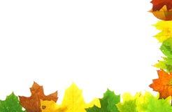 Hojas de la caída del otoño - marco Fotos de archivo libres de regalías