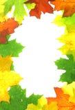 Hojas de la caída del otoño - marco Foto de archivo