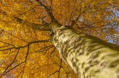 Hojas de la caída en árbol Imágenes de archivo libres de regalías