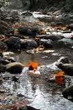 Hojas de la caída en agua imagenes de archivo