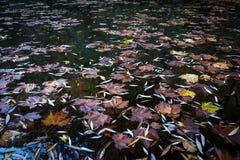Hojas de la caída en el agua Foto de archivo libre de regalías