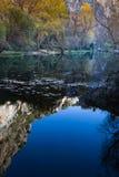 Hojas de la caída en el agua Imagen de archivo libre de regalías