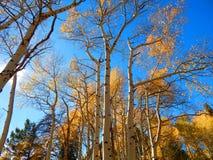 Hojas de la caída en el arco Wyoming de la medicina imagenes de archivo