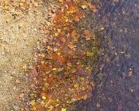Hojas de la caída en el borde del ` s del río Imagen de archivo