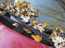Hojas de la caída en el parabrisas del coche Imagen de archivo