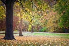 Hojas de la caída en el parque Fotos de archivo libres de regalías