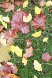 Hojas de la caída en hierba verde imagenes de archivo