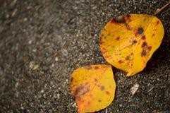 Hojas de la caída en la acera concreta mojada Imágenes de archivo libres de regalías