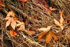 Hojas de la caída en la hierba Foto de archivo