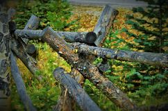 Hojas de la caída en la montaña de COLORADO Fotografía de archivo