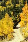 Hojas de la caída en la montaña de COLORADO Foto de archivo libre de regalías