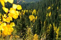 Hojas de la caída en la montaña de COLORADO Foto de archivo