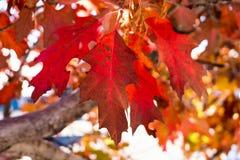 Hojas de la caída en otoño Fotografía de archivo libre de regalías