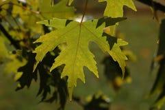 Hojas de la caída en tonos verdes Foto de archivo libre de regalías