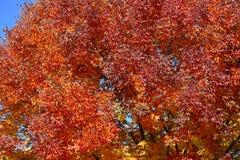 Hojas de la caída en un árbol Imagen de archivo