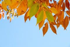 Hojas de la caída en un día quebradizo del otoño Foto de archivo