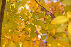 Hojas de la caída en un día quebradizo del otoño Fotos de archivo