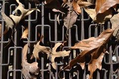 Hojas de la caída en una rejilla Fotografía de archivo libre de regalías