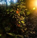 Hojas de la caída encendidas para arriba por la luz del sol imágenes de archivo libres de regalías