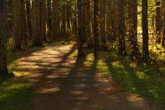 Hojas de la caída de las sombras del árbol del rastro de HDR que caminan Sussex imagen de archivo libre de regalías