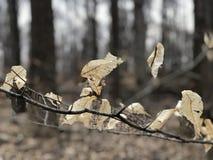 Hojas de la caída que se aferran encendido como vacaciones de primavera fotografía de archivo