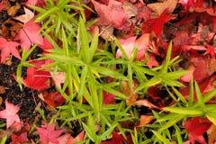 Hojas de la caída y hierba verde Foto de archivo libre de regalías