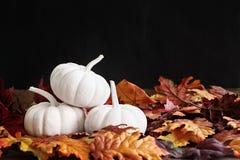 Hojas de la caída y Mini Pumpkins blanco Fotografía de archivo libre de regalías