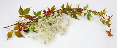Hojas de la caída y de otoño en una colección blanca del fondo Foto de archivo libre de regalías