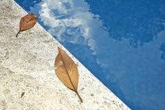 Hojas de la caída al borde de una piscina azul Fotografía de archivo libre de regalías