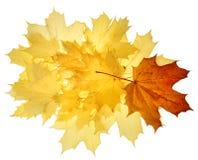 Hojas de la caída del otoño Imagen de archivo