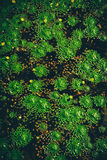 Hojas de la castaña de agua Fotografía de archivo