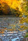 Hojas de la charca del paisaje del parque del otoño en el agua Imagenes de archivo