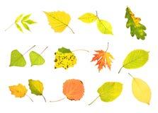 Hojas de la colección del otoño Fotos de archivo