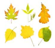 Hojas de la colección del otoño Imagenes de archivo
