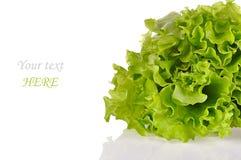 Hojas de la ensalada verde aisladas en un fondo blanco Fotografía de archivo libre de regalías