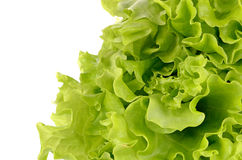 Hojas de la ensalada verde aisladas en un fondo blanco Fotografía de archivo
