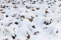 Hojas de la estación y del amarillo del invierno en nieve Imágenes de archivo libres de regalías
